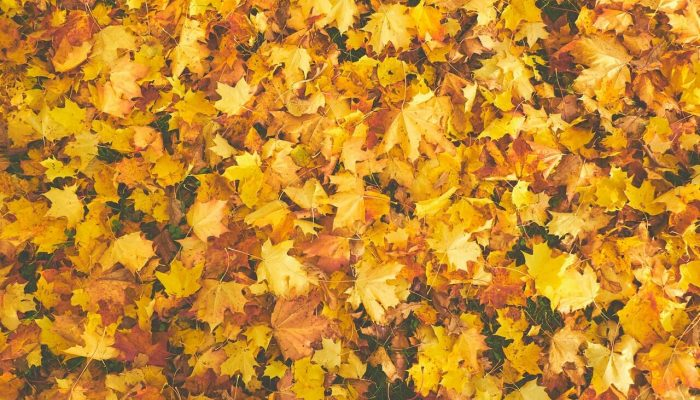 Fall and Your Outdoor Space – Making the Most of What the Season Offers Ultimate Academy Decorating Course